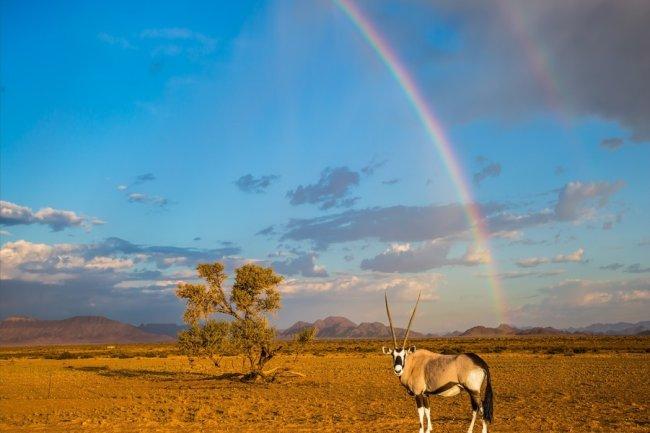 Oázis dél-ausztrália