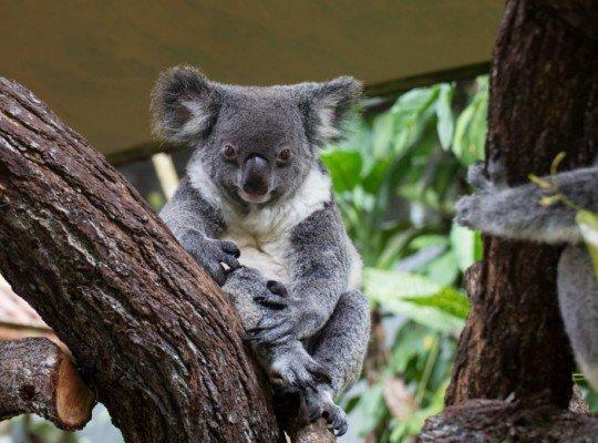 Repülj és vezess! — Három hét Ausztráliában Egyéni utazások, Repülj és vezess!, Felfedezőutak, Különleges ajánlatok, Felfedezőutak, Ausztrália és Óceánia, Ausztrália